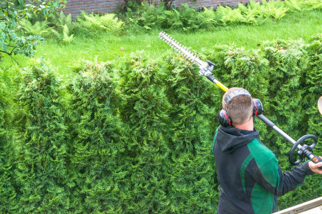 hovenier tuinonderhoud heg knippen